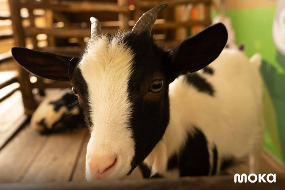 KidZoo PVJ, Kebun Binatang Bandung Kegemaran Anak-anak (2)