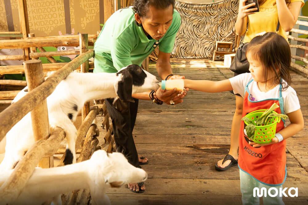 KidZoo PVJ, Kebun Binatang Bandung Kegemaran Anak-anak (5)