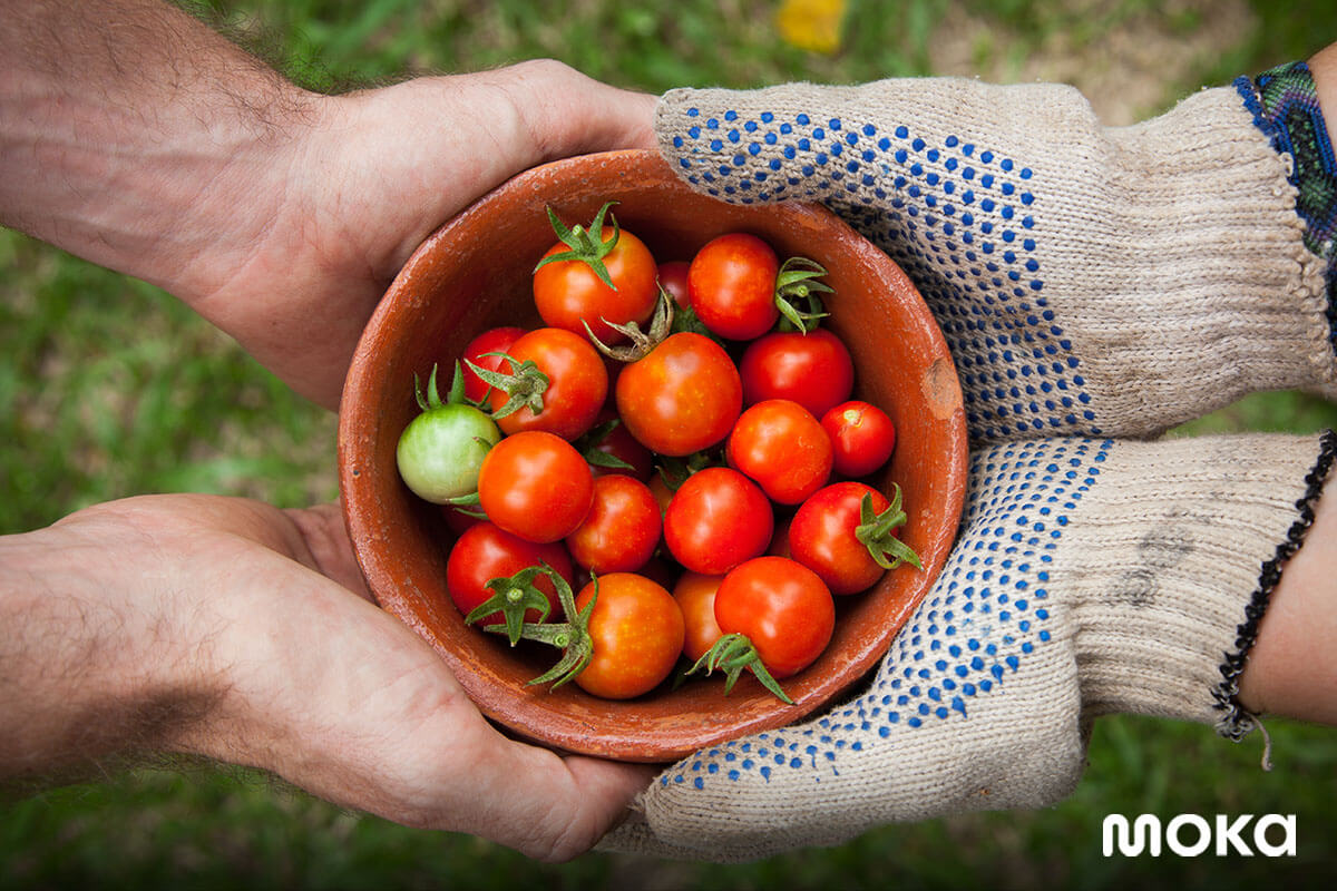 bisnis modal kecil - berkebun - bertani (3)