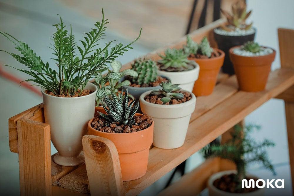 menjual tanaman